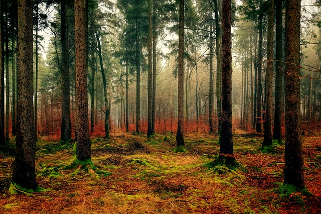 hustý les