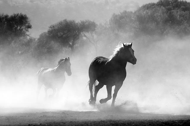 běh koní